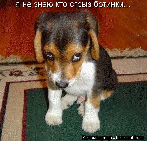 Котоматрица: я не знаю кто сгрыз ботинки...