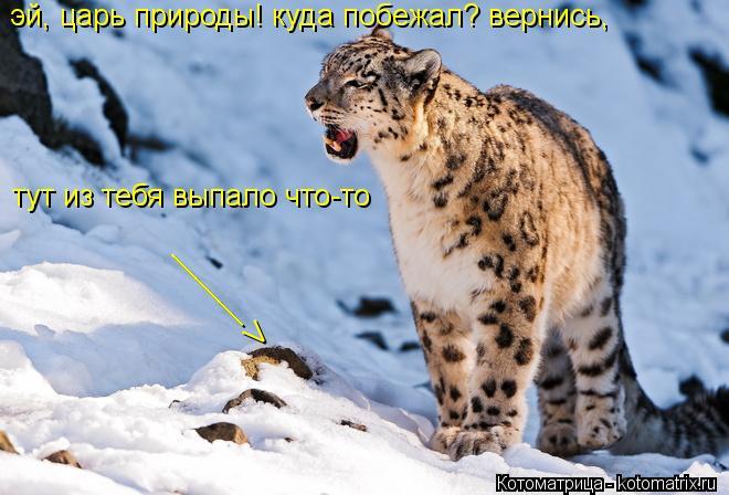 Котоматрица: эй, царь природы! куда побежал? вернись, тут из тебя выпало что-то ______ V