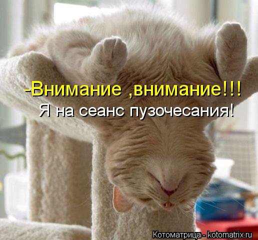 Котоматрица: -Внимание ,внимание!!! Я на сеанс пузочесания!