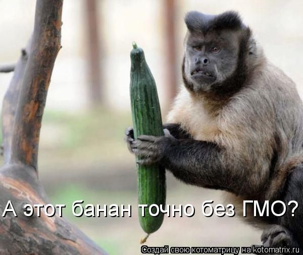 Котоматрица: А этот банан точно без ГМО?