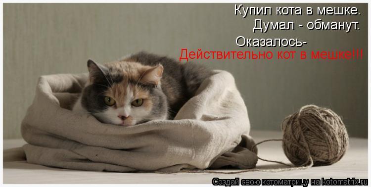 Котоматрица: Купил кота в мешке. Думал - обманут. Оказалось- Действительно кот в мешке!!!