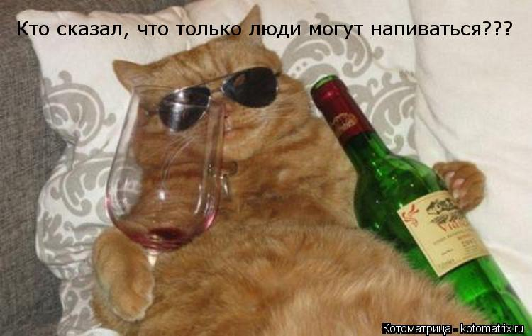 Котоматрица: Кто сказал, что только люди могут напиваться???