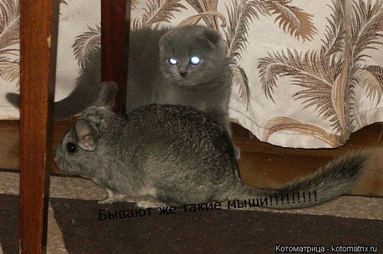 Котоматрица: Бывают же такие мыши!!!!!!!!!