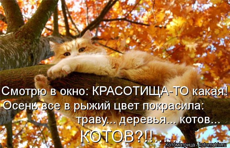 Котоматрица: Смотрю в окно: КРАСОТИЩА-ТО какая! Осень все в рыжий цвет покрасила:  траву... деревья... котов... КОТОВ?!!......