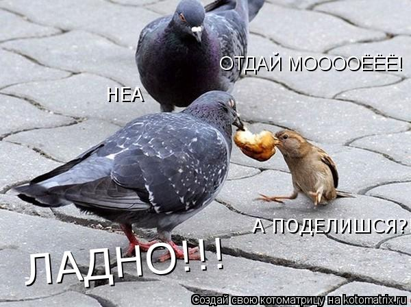 Котоматрица: ОТДАЙ МООООЁЁЁ! НЕА  А ПОДЕЛИШСЯ?!  ЛАДНО!!!
