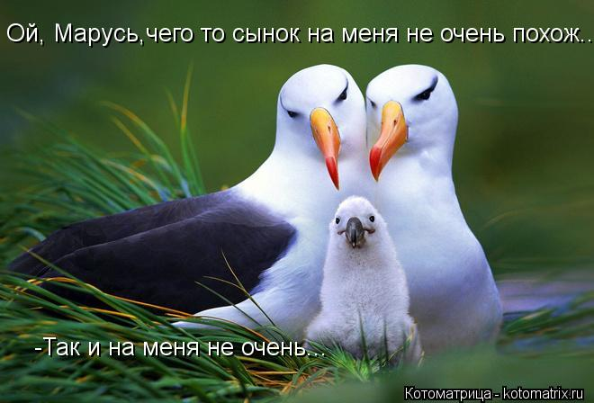 Котоматрица: Ой, Марусь,чего то сынок на меня не очень похож... -Так и на меня не очень...