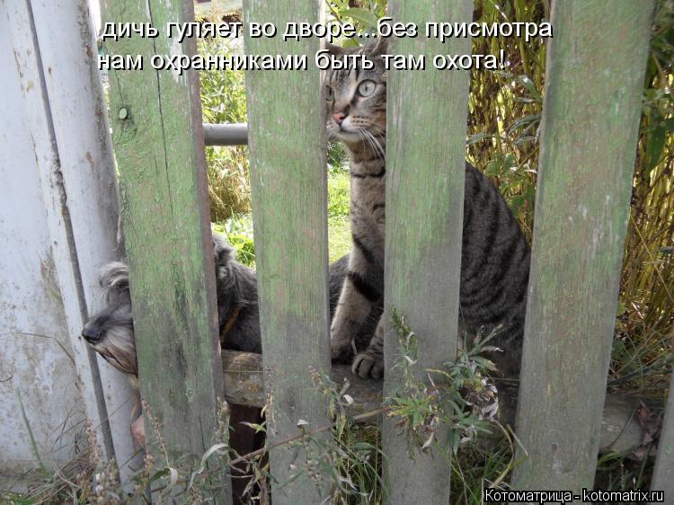 Котоматрица: дичь гуляет во дворе...без присмотра нам охранниками быть там охота!