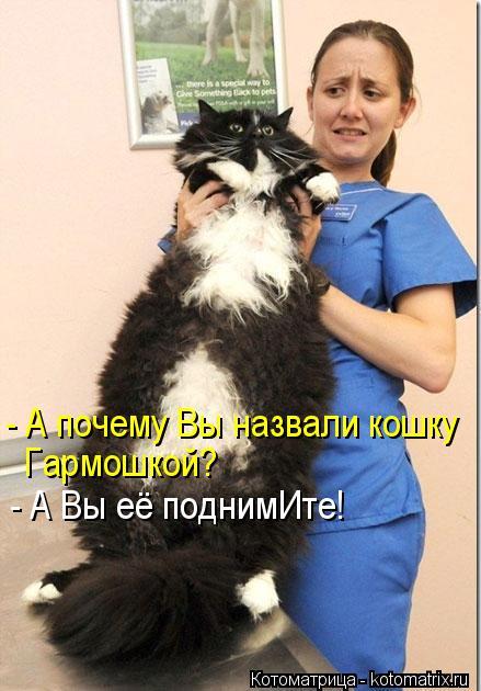 Котоматрица: - А почему Вы назвали кошку Гармошкой? - А Вы её поднимИте!