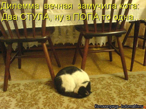 Котоматрица: Дилемма  вечная  замучила кота: Два СТУЛА, ну а ПОПА то одна…..