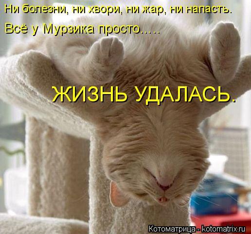 Котоматрица: Ни болезни, ни хвори, ни жар, ни напасть. Всё у Мурзика просто…..   ЖИЗНЬ УДАЛАСЬ.