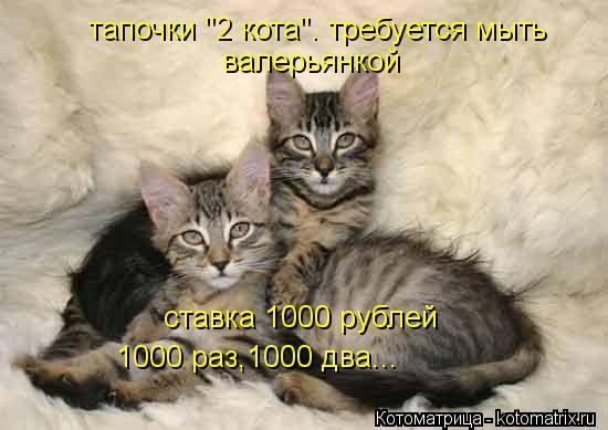 """Котоматрица: тапочки """"2 кота"""". требуется мыть валерьянкой ставка 1000 рублей 1000 раз,1000 два..."""