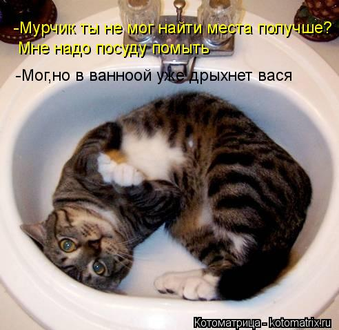 Котоматрица: -Мурчик ты не мог найти места получше? Мне надо посуду помыть -Мог,но в ванноой уже дрыхнет вася