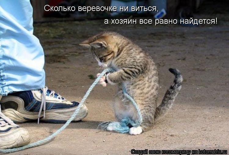 Котоматрица: Сколько веревочке ни виться, а хозяин все равно найдется!