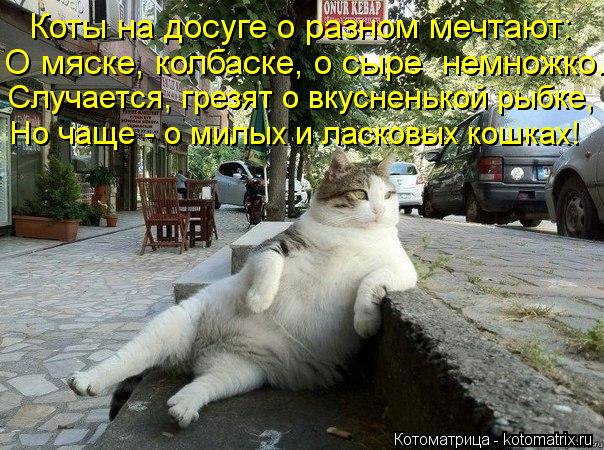 Котоматрица: Коты на досуге о разном мечтают: О мяске, колбаске, о сыре  немножко. Случается, грезят о вкусненькой рыбке, Но чаще - о милых и ласковых кошка