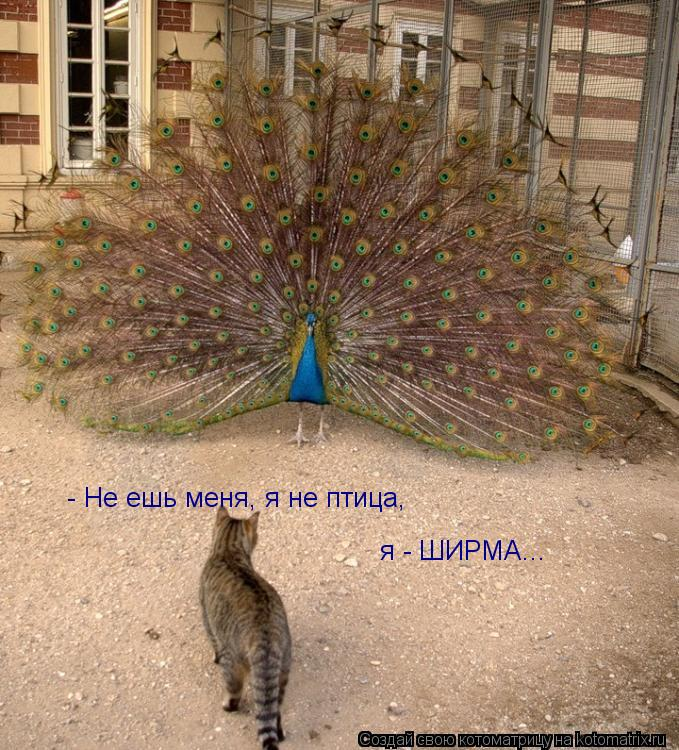 Котоматрица: - Не ешь меня, я не птица,  я - ШИРМА...