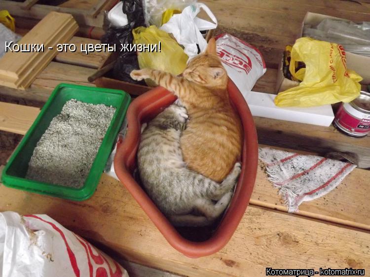 Котоматрица: Кошки - это цветы жизни!