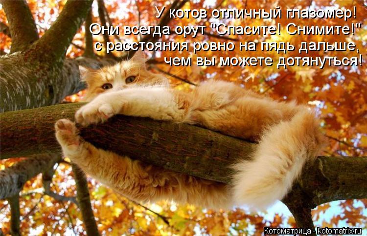 """Котоматрица: У котов отличный глазомер! с расстояния ровно на пядь дальше,  чем вы можете дотянуться! Они всегда орут """"Спасите! Снимите!"""""""