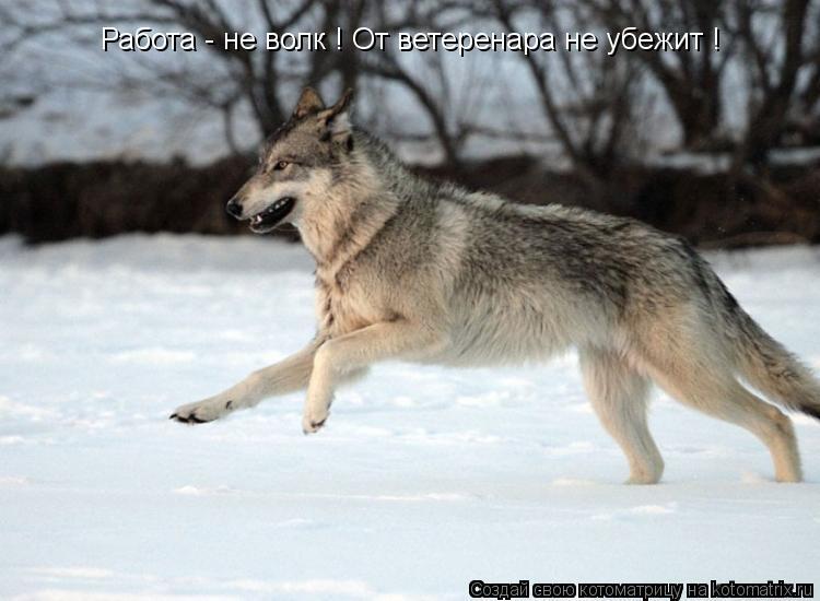 Котоматрица: Работа - не волк ! От ветеренара не убежит !
