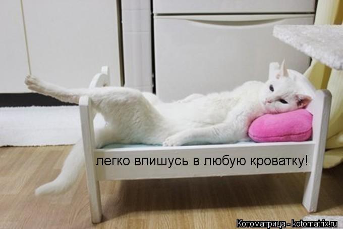 Котоматрица: легко впишусь в любую кроватку!