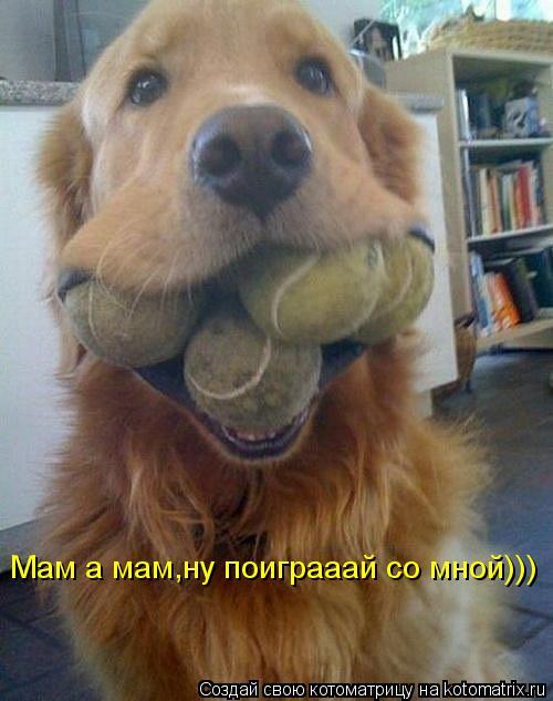 Котоматрица: Мам а мам,ну поиграаай со мной)))