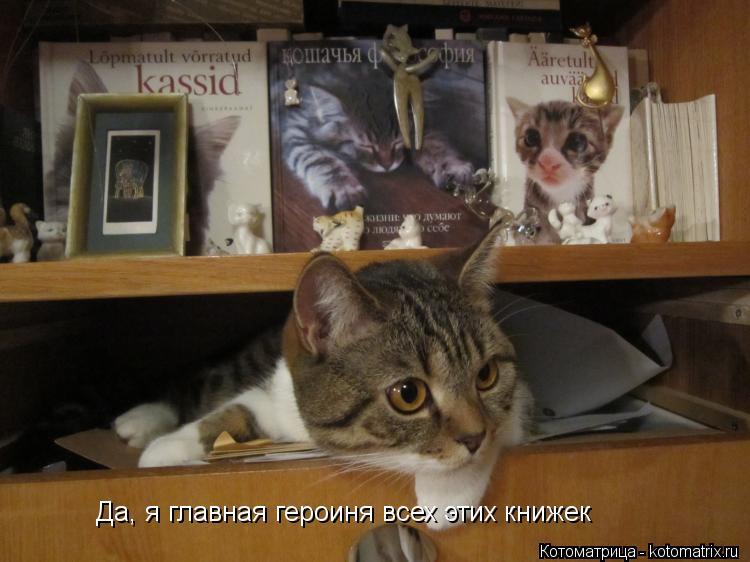 Котоматрица: Да, я главная героиня всех этих книжек