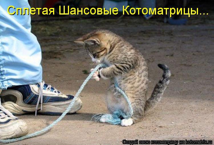 Котоматрица: Сплетая Шансовые Котоматрицы...