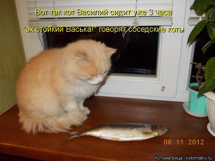 """Котоматрица: Вот так кот Василий сидит уже 3 часа """"эх стойкий Васька!"""" говорят соседские коты"""
