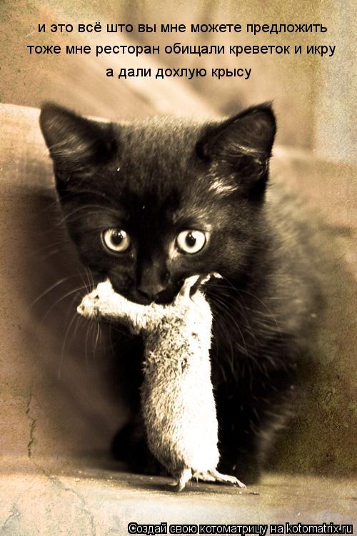 Котоматрица: и это всё што вы мне можете предложить тоже мне ресторан обищали креветок и икру а дали дохлую крысу