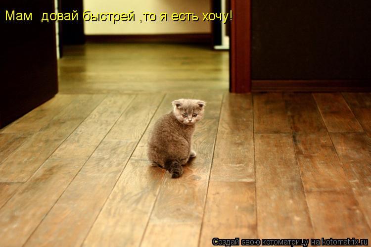Котоматрица: Мам довай быстрей ,то я есть хочу!