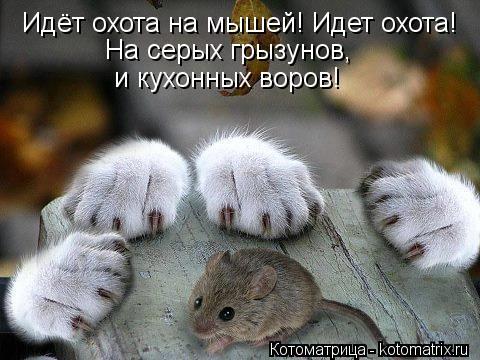 Котоматрица: Идёт охота на мышей! Идет охота! На серых грызунов,  и кухонных воров!