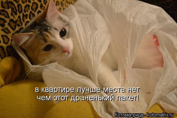 Котоматрица: в квартире лучше места нет чем этот драненький пакет!