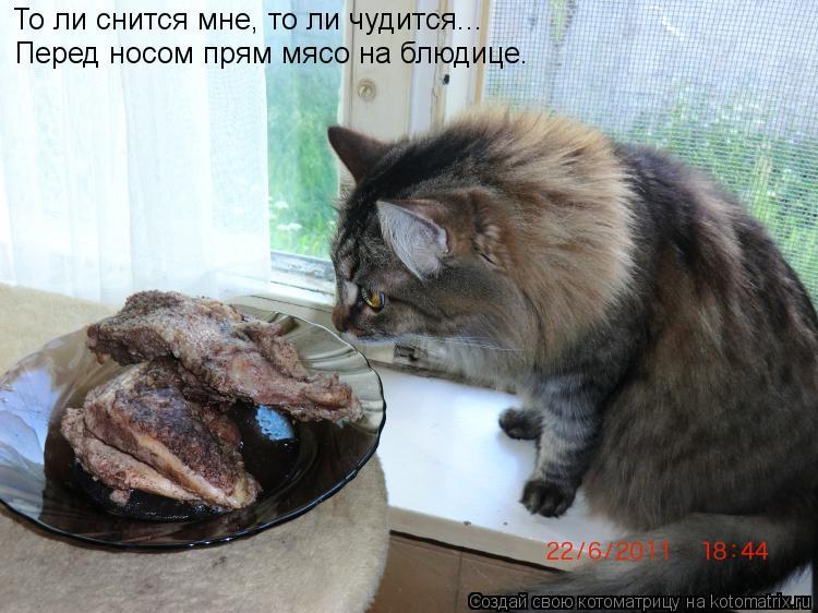 Котоматрица: То ли снится мне, то ли чудится... Перед носом прям мясо на блюдице.