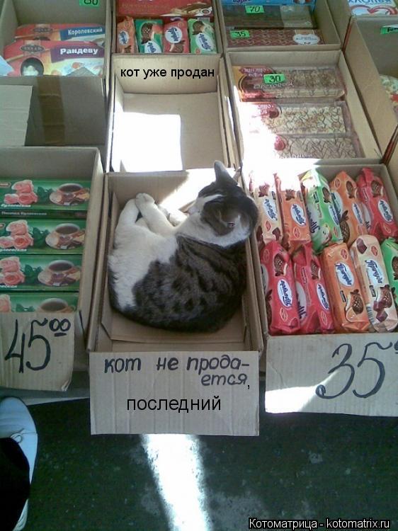 Котоматрица: кот уже продан последний ,