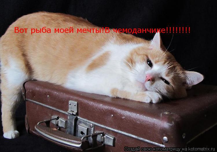 Котоматрица: Вот рыба моей мечты!В чемоданчике!!!!!!!!