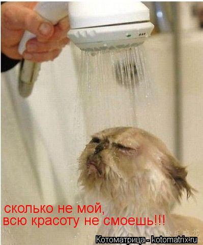 Котоматрица: сколько не мой,  всю красоту не смоешь!!!