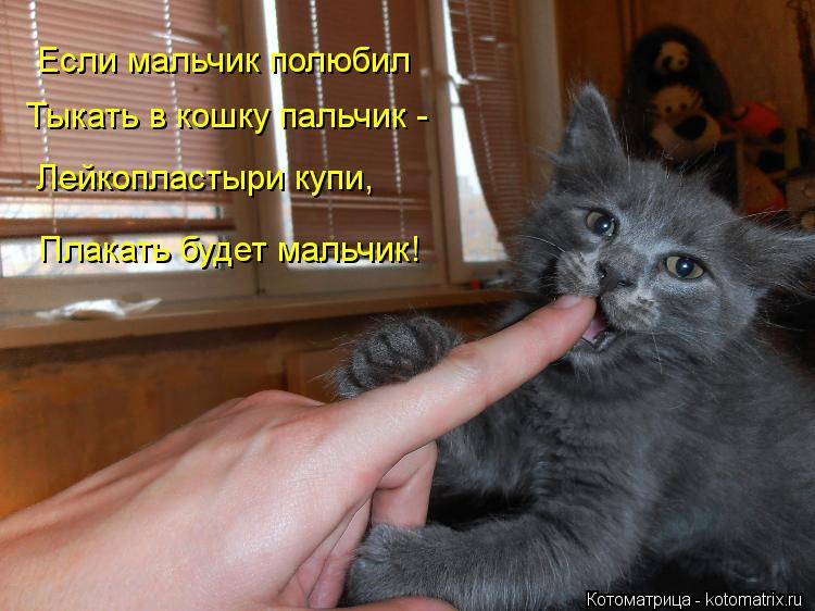 Котоматрица: Если мальчик полюбил  Тыкать в кошку пальчик - Лейкопластыри купи, Плакать будет мальчик!