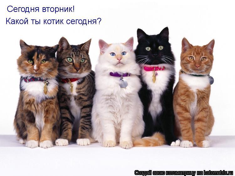 Котоматрица: Сегодня вторник! Сегодня вторник! Какой ты котик сегодня?