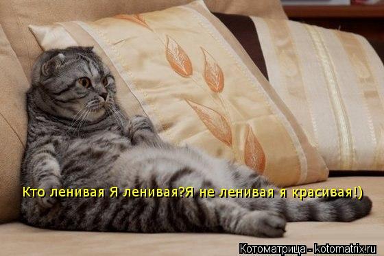 Котоматрица: Кто ленивая Я ленивая?Я не ленивая я красивая!)