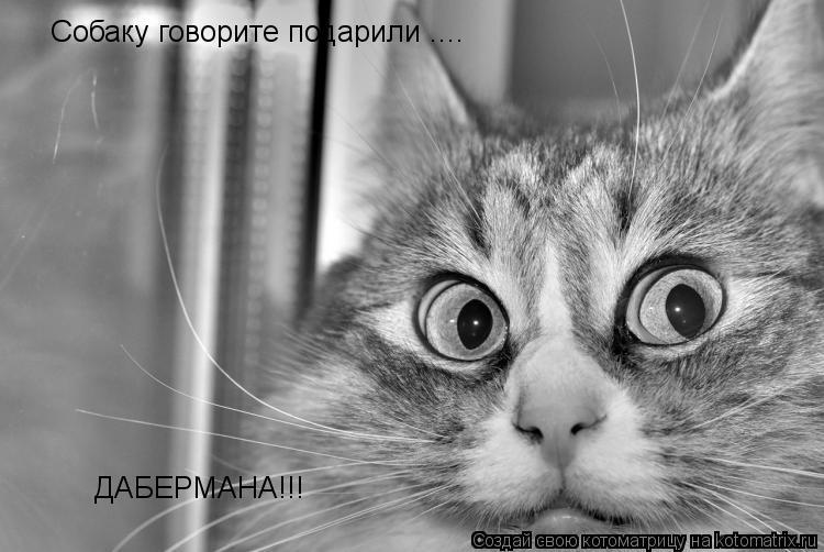 Котоматрица: Собаку говорите подарили .... ДАБЕРМАНА!!!