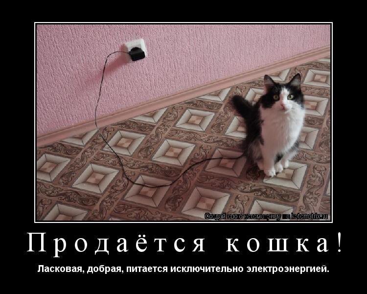Котоматрица: Продаётся кошка! Ласковая, добрая, питается исключительно электроэнергией.