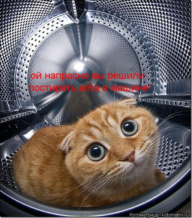 Котоматрица: ой напрасно вы решили постирать кота в машине!