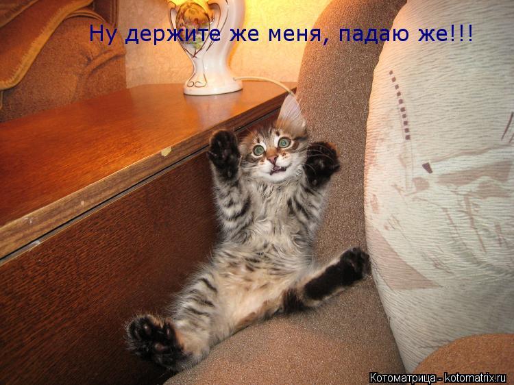 Котоматрица: Ну держите же меня, падаю же!!!