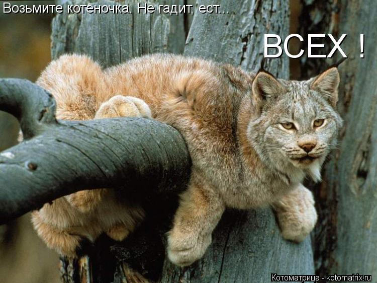 Котоматрица: Возьмите котёночка. Не гадит, ест... ВСЕХ !