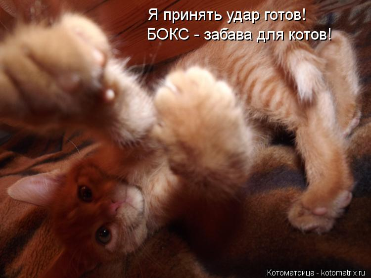 Котоматрица: Я принять удар готов! БОКС - забава для котов!
