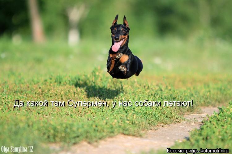 Котоматрица: Да какой там Супермен, у нас собаки летают!