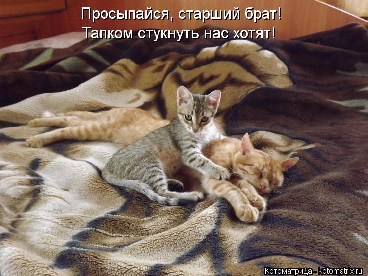 Котоматрица: Просыпайся, старший брат! Тапком стукнуть нас хотят!