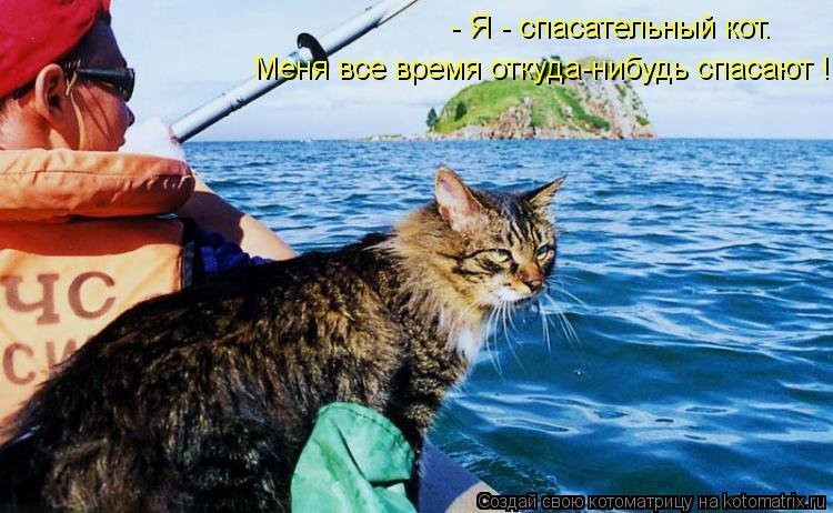 Котоматрица: - Я - спасательный кот. Меня все время откуда-нибудь спасают !