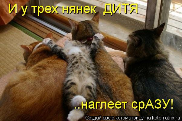 Котоматрица: И у трех нянек  ДИТЯ ..наглеет срАЗУ!