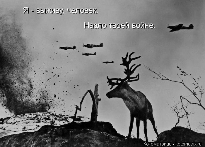 Котоматрица: Я - выживу, человек. Назло твоей войне.