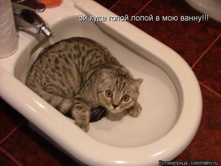 Котоматрица: эй,куда голой попой в мою ванну!!!